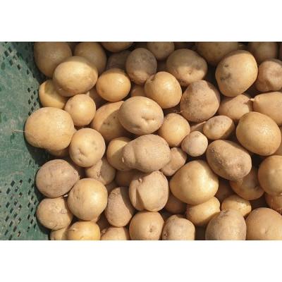 [구름위농장] 감자(계란크기, 국산) 10kg