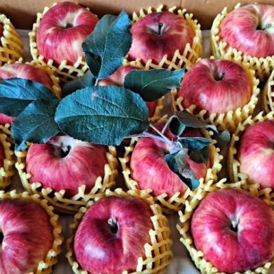 [신바람농장] 홍로 사과(가정용) 10kg 꼬마사과 (44-50과)