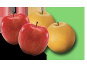 과일/채소